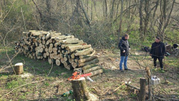 Мужчина нарубил деревьев почти на 69 тысяч гривен
