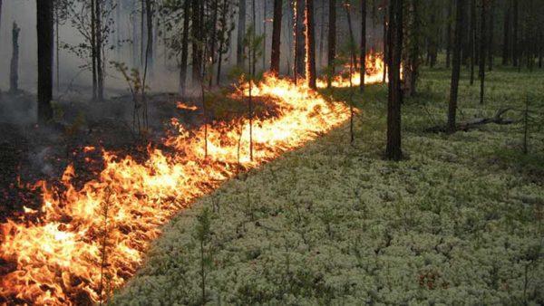 Сегодня в Александрии прогнозируют высокую пожарную опасность