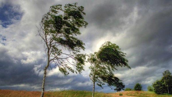 Штормовое предупреждение: завтра в Александрии будет облачно и сильный ветер