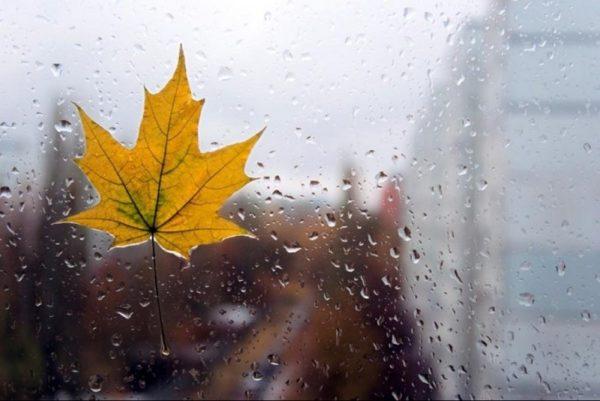 В Кировоградской области прогнозируют туман и дожди
