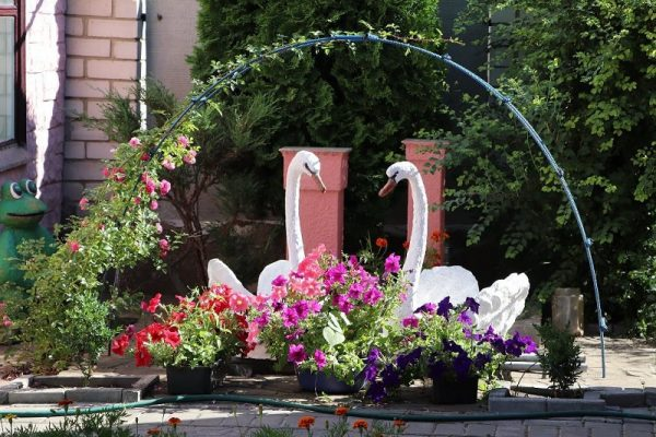 В Александрии проходит конкурс «Лучшее благоустройство частной усадьбы» (ФОТО)