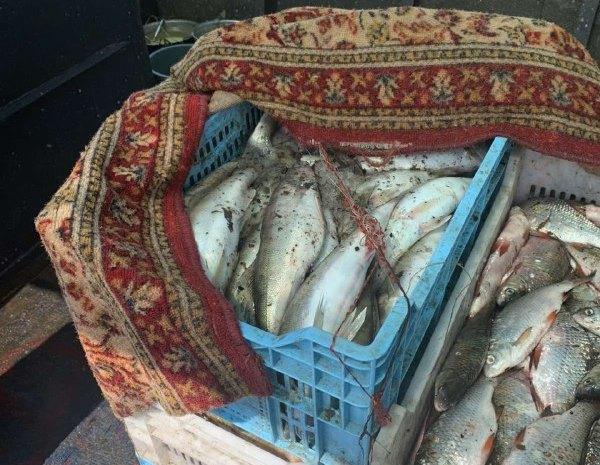 В Александрийском районе мужчина незаконно выловил судака на сумму более 1 миллиона гривен (ФОТО)