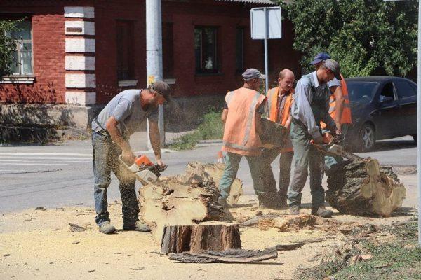 Александрийские коммунальщики устраняют последствия непогоды (ФОТО)