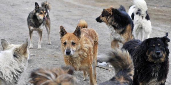 В Александрии 10-летнего укусила уличная собака