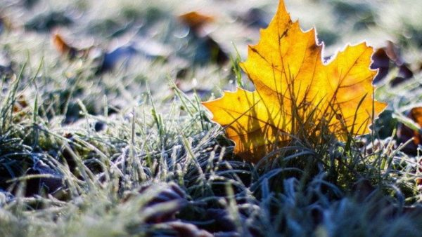В Кировоградской области прогнозируют заморозки