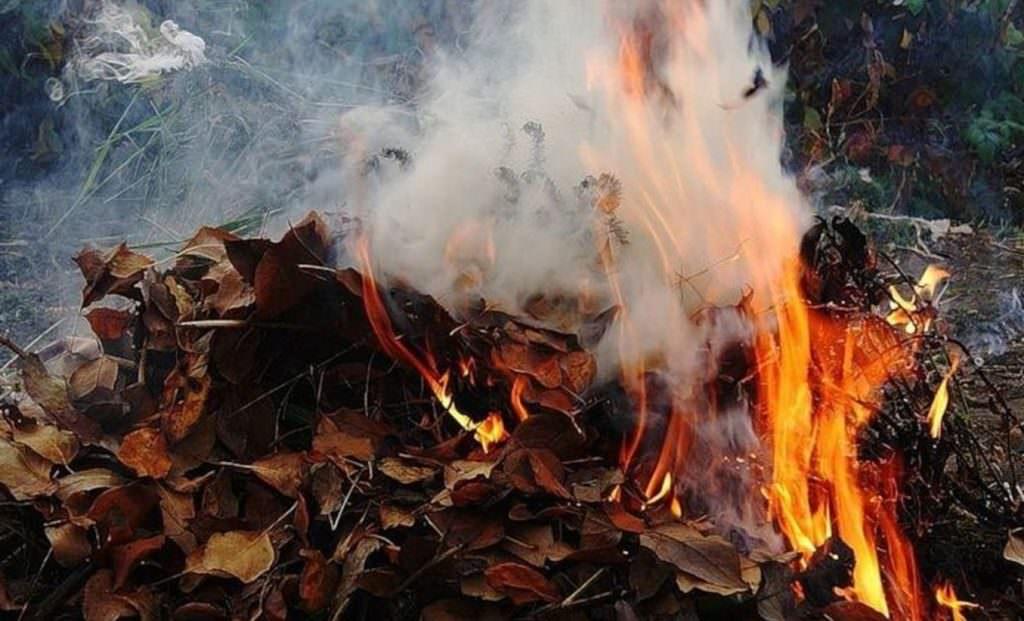 Какой штраф грозит александрийцам за сжигание мусора и листвы